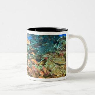 Anthiasの魚および黒い珊瑚のWetarの島、 ツートーンマグカップ