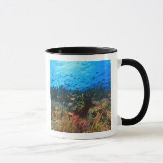 Anthiasの魚の、Wetarの島教育、Banda マグカップ