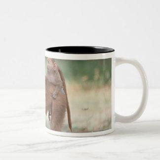 Anubisのヒヒ ツートーンマグカップ