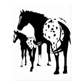 Appaloosaのロバおよび子馬 ポストカード