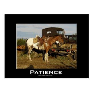 Appaloosaの馬のウマ科のでやる気を起こさせるな芸術カード ポストカード