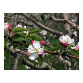 Appleの02の花のウィンチェスターVAの郵便はがき ポストカード