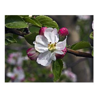 Appleの03の花のウィンチェスターVAの郵便はがき ポストカード