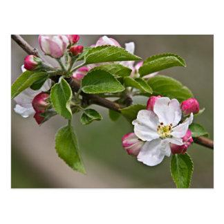 Appleの05の花のウィンチェスターVAの郵便はがき ポストカード