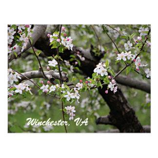 Appleの09の花のウィンチェスターVAの郵便はがき ポストカード
