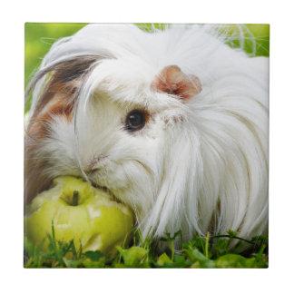 Appleを食べているかわいく白く長い毛のモルモット タイル