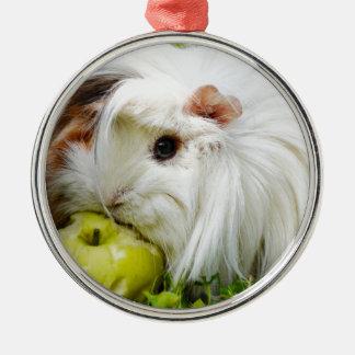 Appleを食べているかわいく白く長い毛のモルモット メタルオーナメント