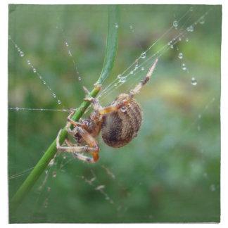 Araneus -球体の織工のくも ナプキンクロス