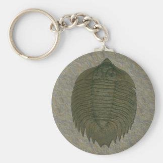 Arctinrus Boltoniの化石Trilobite キーホルダー