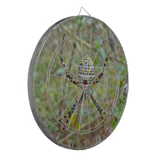 Argiopeのtrifasciataの球体の織工のくも ダーツボード