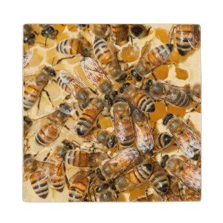 Arloの蜂蜜の農場で保っている蜂 ウッドコースター
