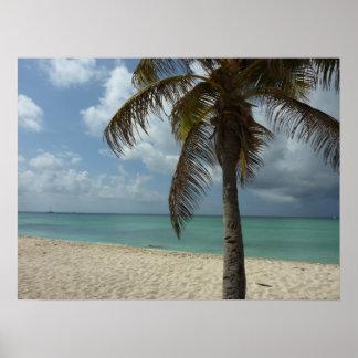 ArubanのビーチIの美しい自然場面 ポスター