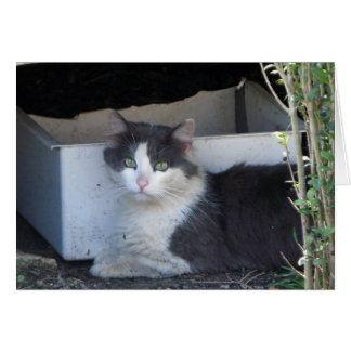 Asbury公園の猫 カード
