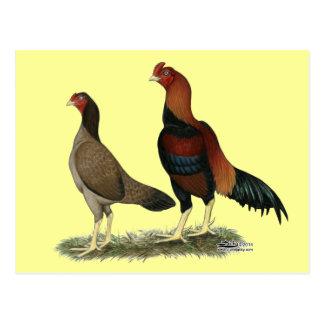 AseelのWheaten鶏 ポストカード
