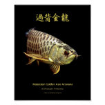 "Asian Arowana ""Golden Type""のポスター ポスター"