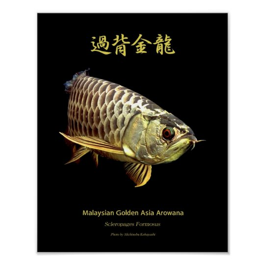 "Asian Arowana ""Golden Type""のポスター ポスター"