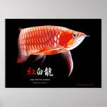 Asian Arowana(Red Type) ポスター