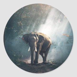 Asian Elephant in a Sunlit Forest Clearing ラウンドシール