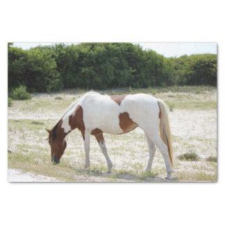 Assateagueの島の馬 薄葉紙
