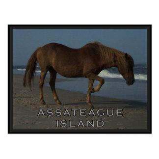 Assateagueの野生の馬1つの郵便はがき ポストカード