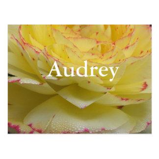 Audrey ポストカード