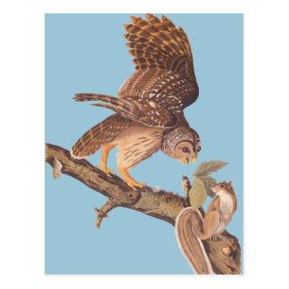 Audubonのアメリカフクロウおよび幸せなリスの友人 ポストカード