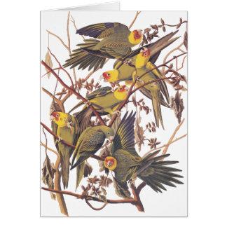 Audubonのカロライナインコ カード