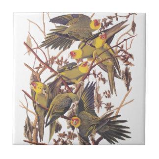 Audubonのカロライナインコ タイル