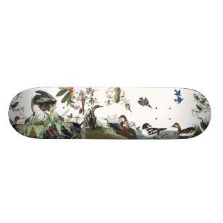 Audubonのコラージュの鳥の野性生物動物のスケートボード スケートボード