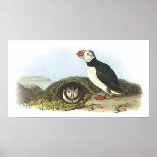 Audubonのツノメドリポスター ポスター
