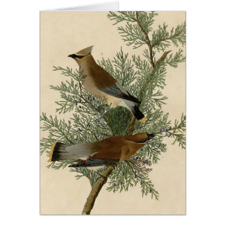 Audubonのヒメレンジャクの鳥 カード