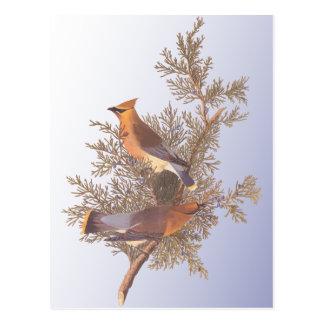 Audubonのヒメレンジャクの鳥 ポストカード