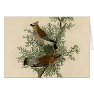 Audubonのヒメレンジャク カード