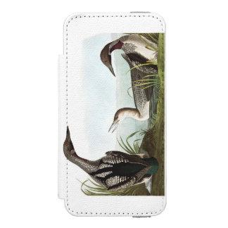 Audubonのプレート346の黒Throatedダイバー Incipio Watson™ iPhone 5 財布 ケース