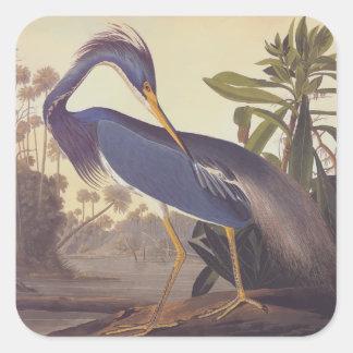 Audubonのルイジアナの鷲かTricoloredの鷲 スクエアシール