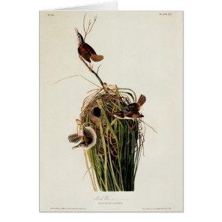 Audubonの沼地ミソサザイのヴィンテージの鳥のプリント カード