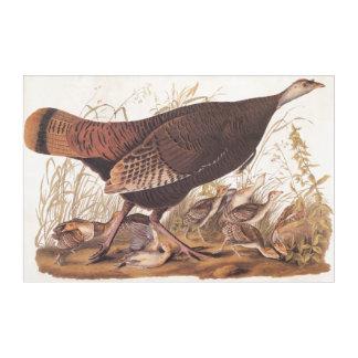 Audubonの野生のトルコの雌鶏およびひよこのヴィンテージの芸術 アクリルウォールアート
