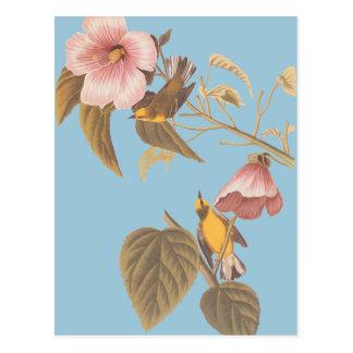 Audubonの青飛んだキイロアメリカムシクイの歌の鳥 ポストカード