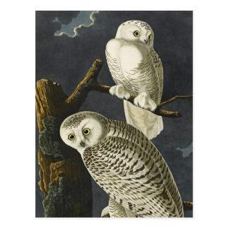 AudubonのSnowyのフクロウ ポストカード