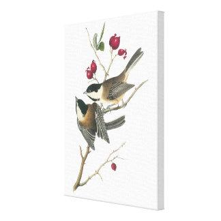 Audubon著黒おおわれた《鳥》アメリカゴガラ キャンバスプリント