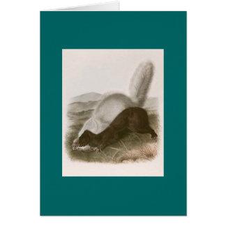 Audubon -テキサス州のスカンク カード