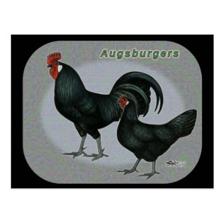 Augsburgerの家禽 ポストカード