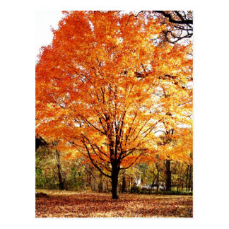 Autumn Leaves Thanksgiving Postcard ポストカード