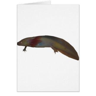 axolotl1 カード