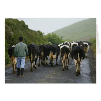 Azorean農家 カード