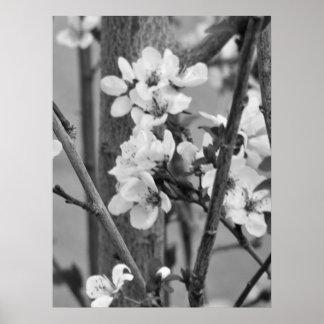 B&Wの花柄-敏感な花 ポスター