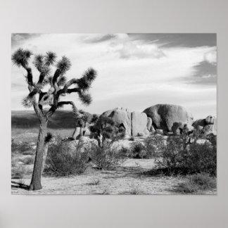 B&Wジョシュアツリーの国立公園 ポスター