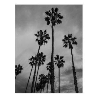 B&Wロサンゼルスのやし ポストカード