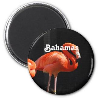 Bahamianのフラミンゴ マグネット