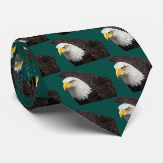 Bald eagle カスタムタイ